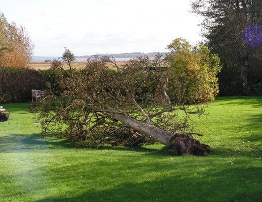 KATASTROFE Stormen Bodil væltede vores skønne pære-hængekøje-træ