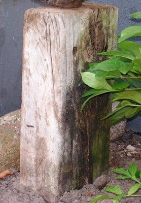 Mønpigens sokkel er en halv svælle der er fundet i vandkanten i Sølager.
